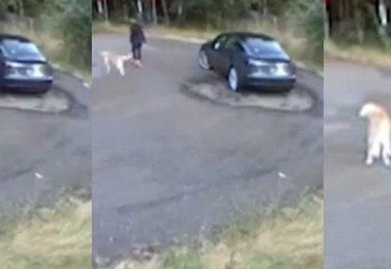 Ternyata Dibuang di Hutan Kisah Tragis Anjing yang Senang Mengira Diajak Jalan-jalan Pemiliknya
